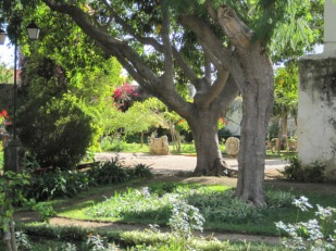 Shade giving trees in the chapel gardens, Tavira