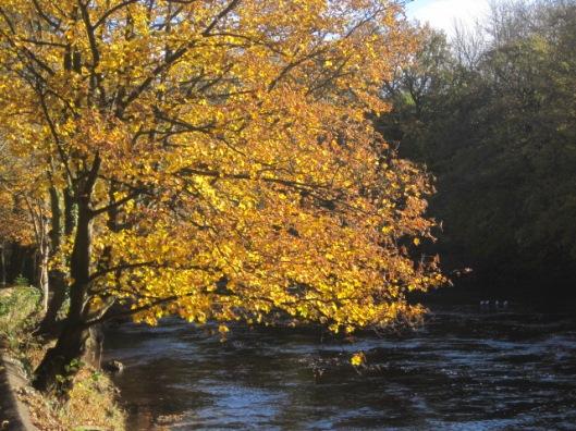 The Autumn colour in Richmond