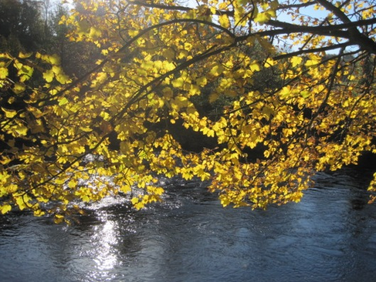And glints through the leaves in Autumn