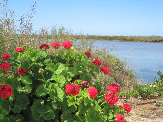 The salt marshes at Fuzeta