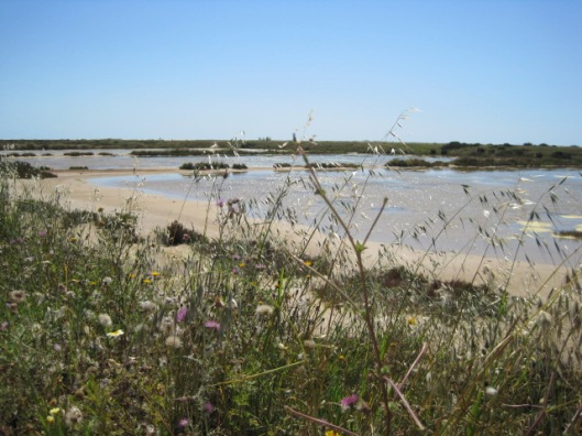 The salt marshes at Fuzeta