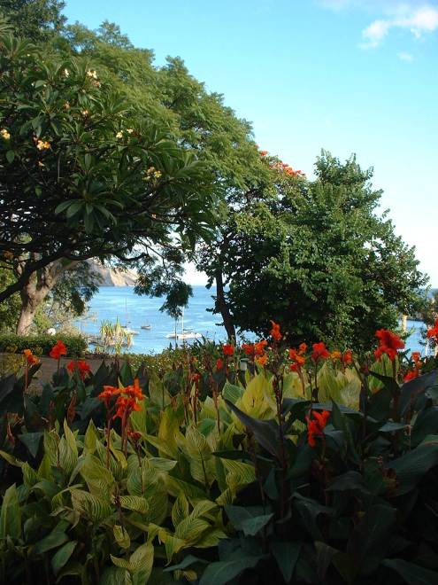 I love peeking at a bay through flowering shrubs, don't you? Madeira, of course.