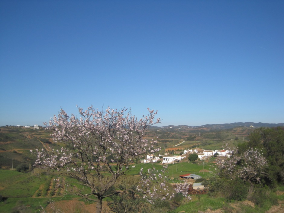 And then tiny Malhada do Peres, enhanced by the almond blossom