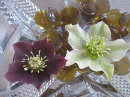 Hellebore heads floating in a bowl of water