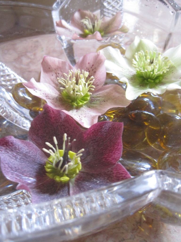 Just a few more hellebores, in retreat from our chilly garden