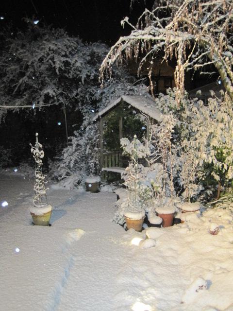 Our garden this Winter