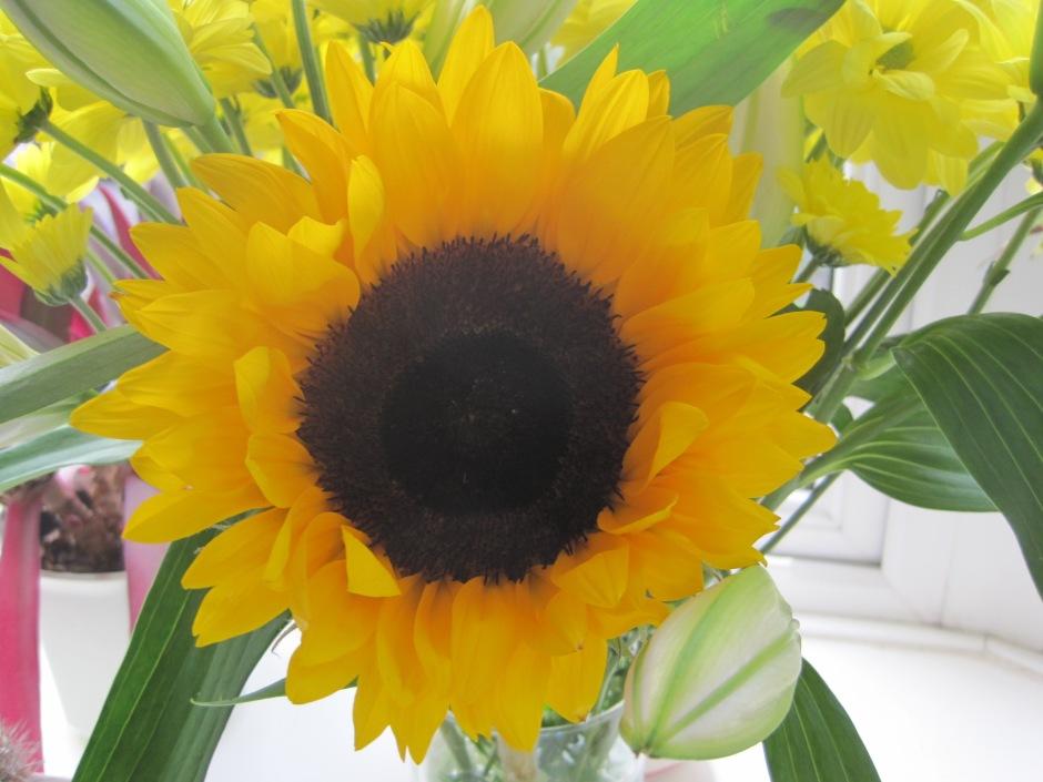 The brazen face of the sunflower