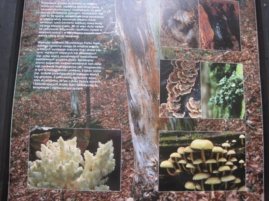 Just a few of the species found in the valley