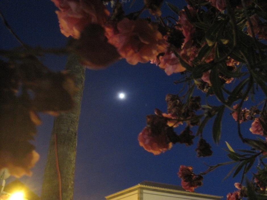 A moonlight wander.