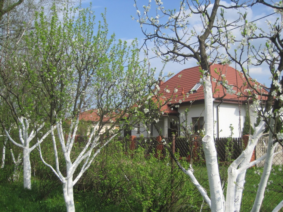 Fruit trees and the neighbours