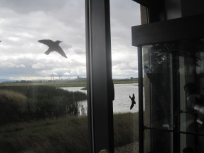 Captive birds are stencilled on the windows. to enhance that view