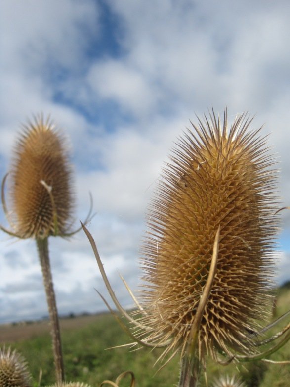 Teasles tickle the skies!