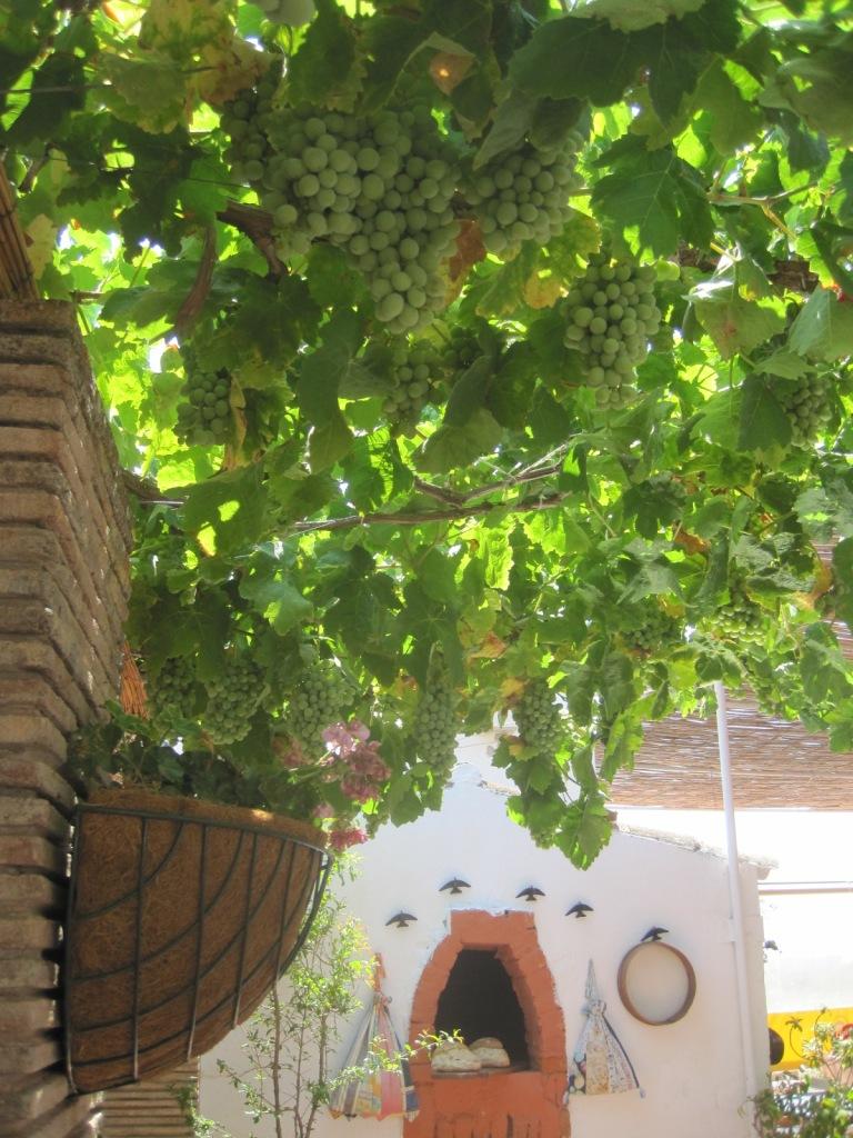 A little grape trampling anyone?