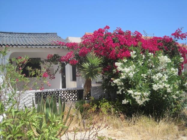 A pretty beach house on Armona
