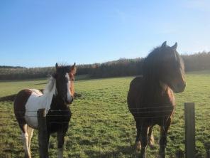 Those horses again!