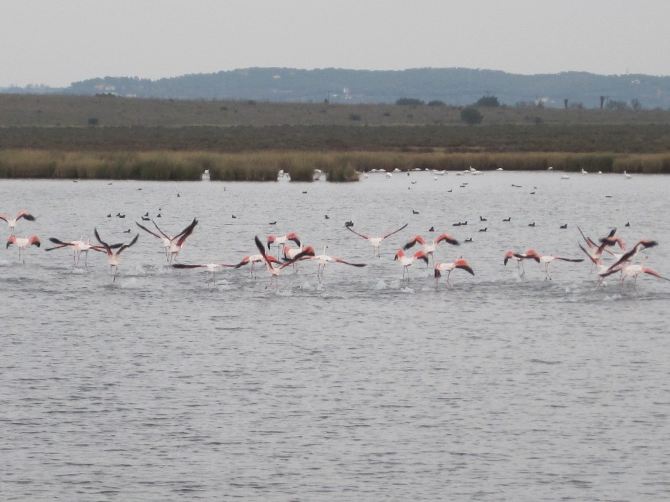 Flamingos on the salt pans (courtesy of Mike Bradley)