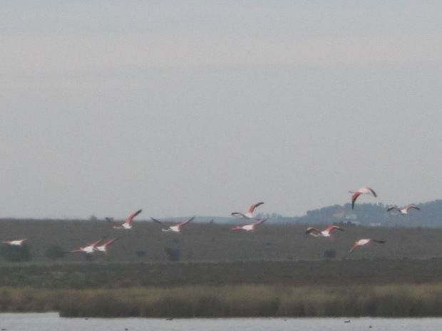 And then, that magical moment when the flamingos take flight!
