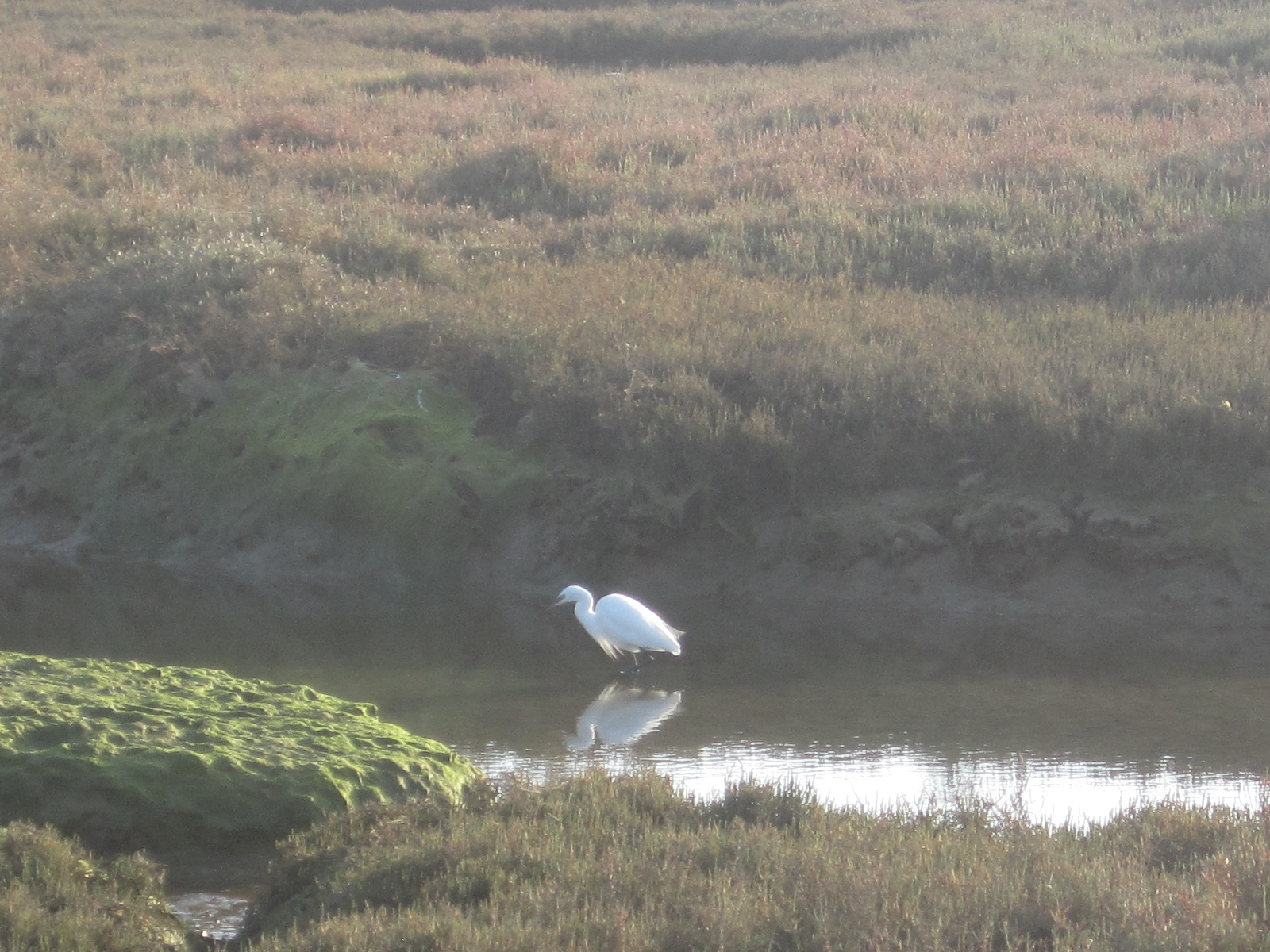 And the bird life in the marshes