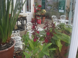 The Winter Garden or conservatory