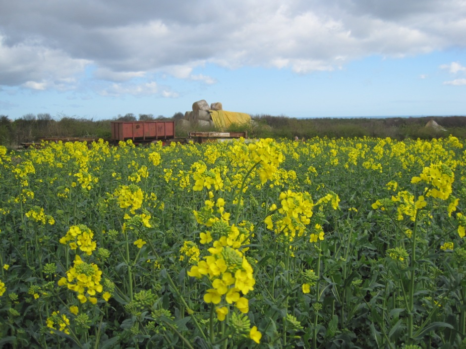 The fields are full of rape seed at the minute
