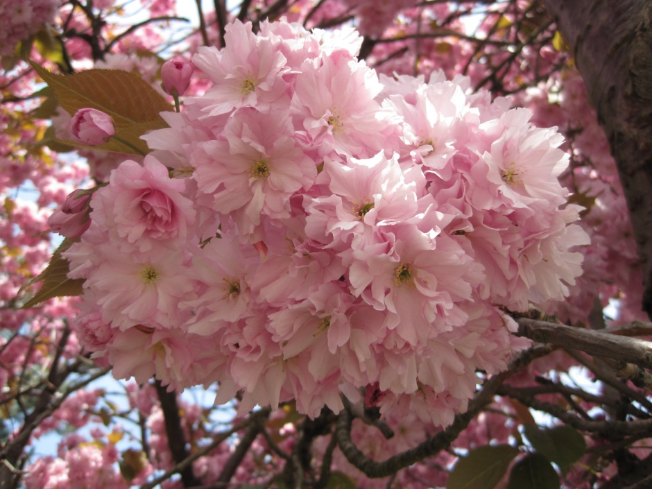 Like this cluster of pinkness!