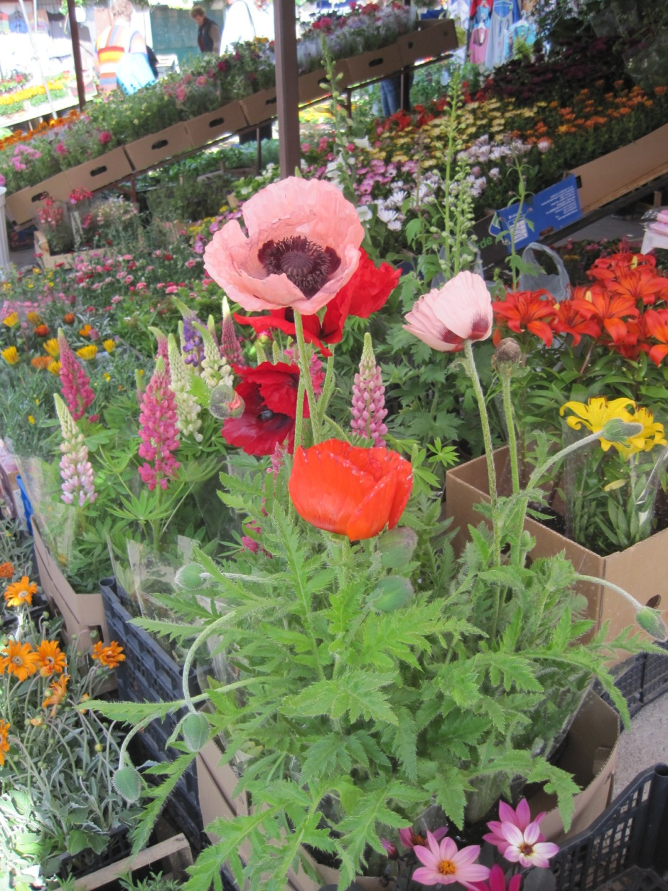 Flower stalls at Borek Falecki market