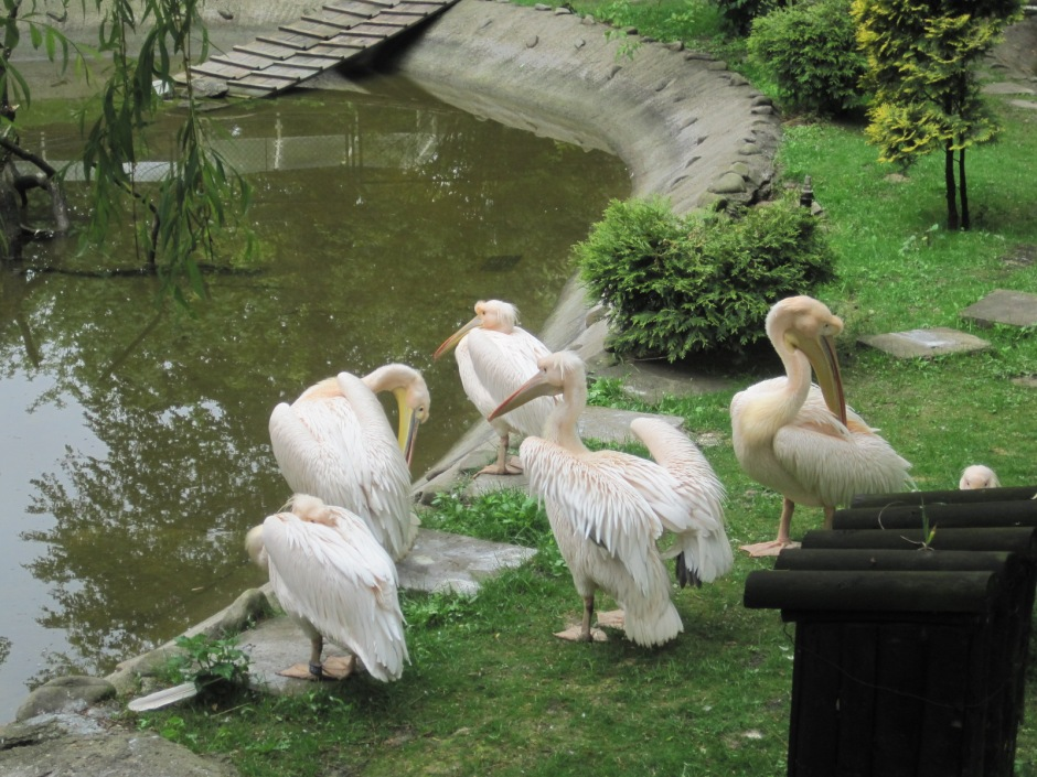 While the pelicans seemed more intent on personal grooming