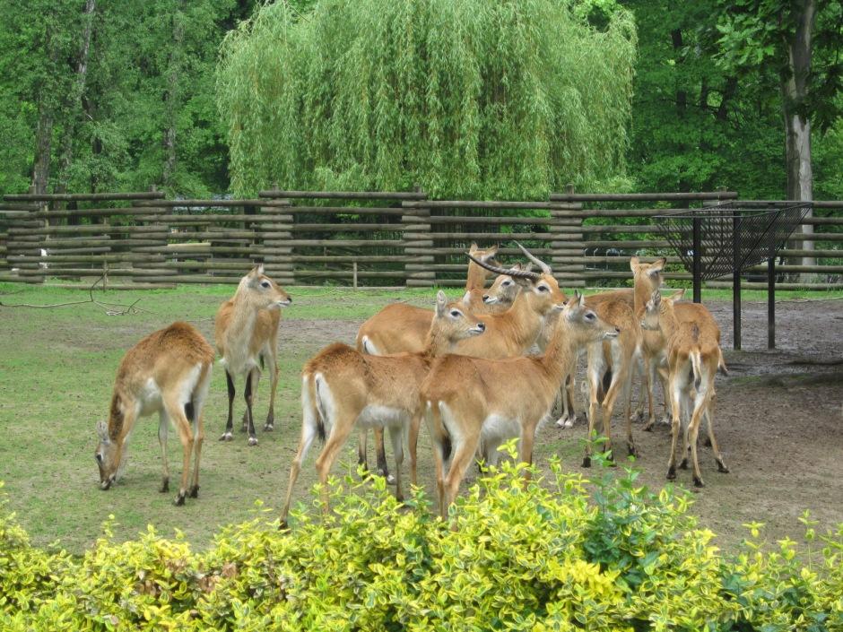 And antelope always make me smile