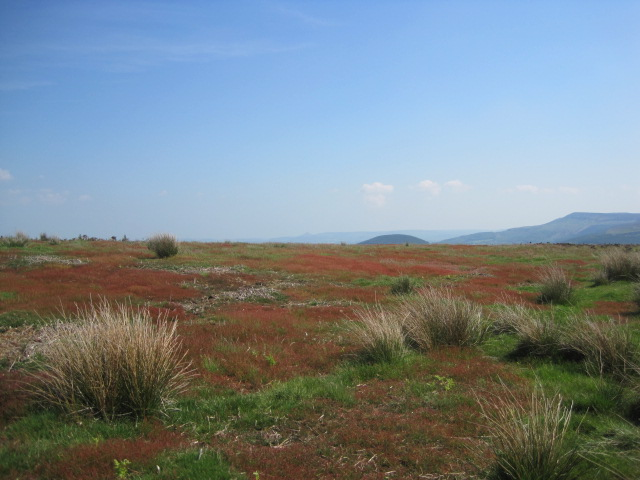 On the Moors, flamboyant colour