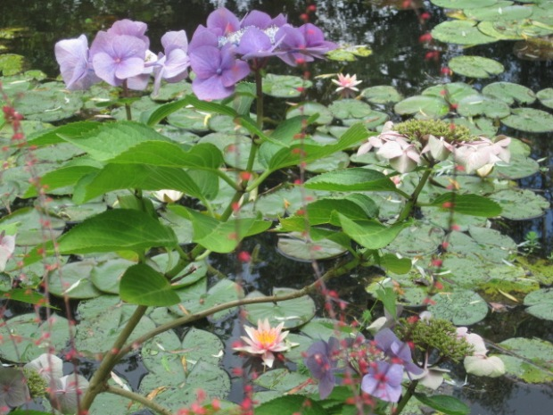 The water lilies, of course!