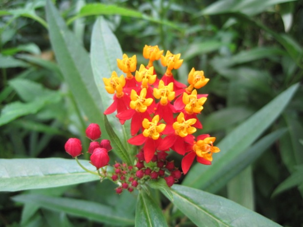 And plants such as these