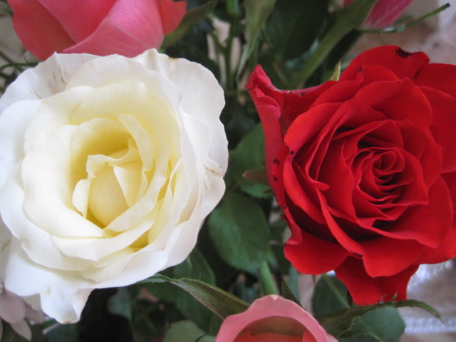 Roses for romance!