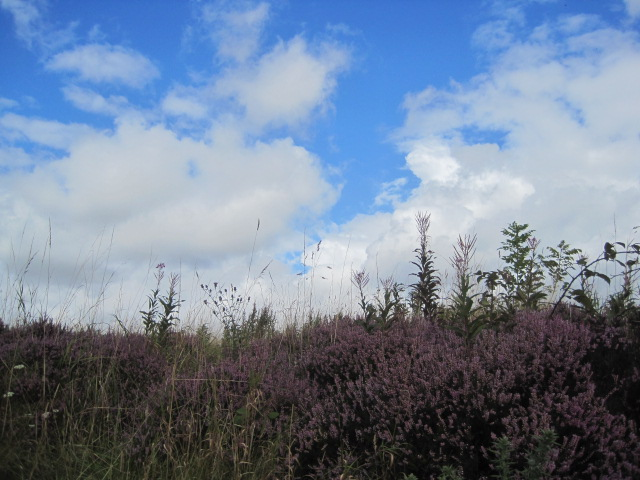 And a lovely patch of heather