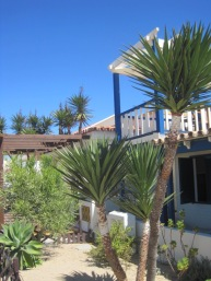 Palms and pretty houses