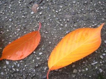A few more damp leaves