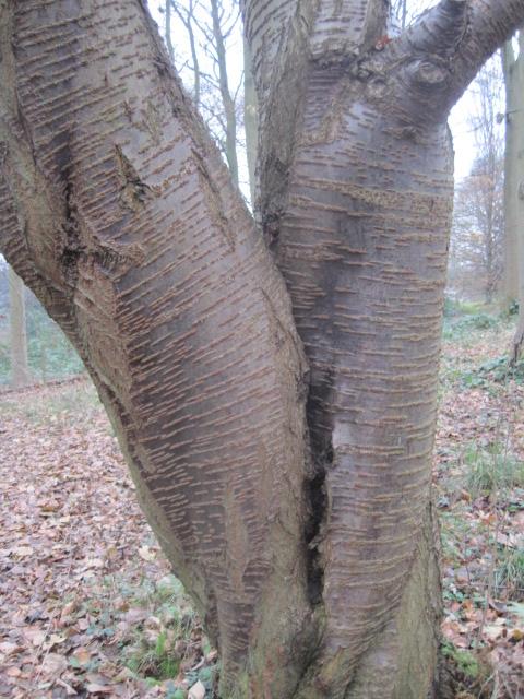 Isn't this bark beautiful?
