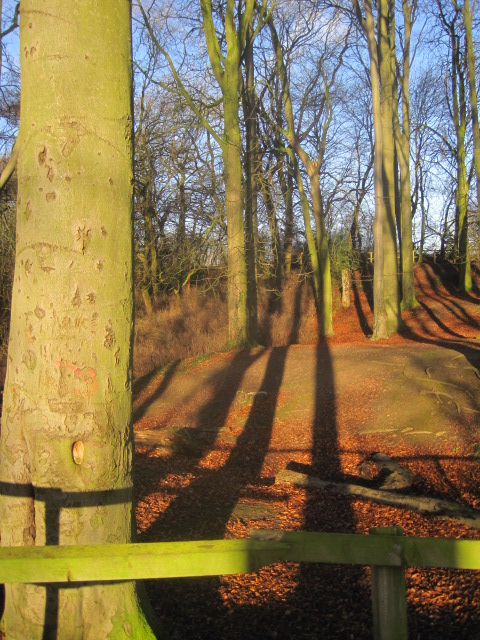 The sun casts interesting shadows
