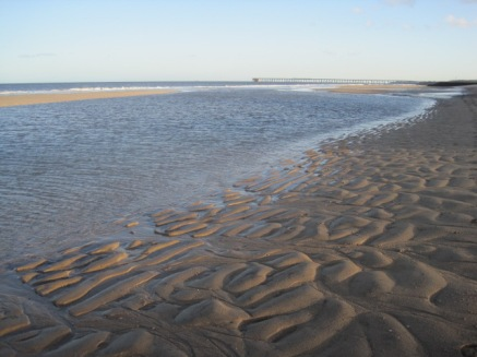 I gallop along, but pause, intrigued by the sand patterns