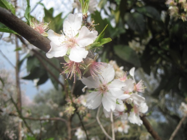 Irresistible blossom