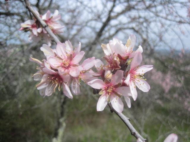 Deeper blossom