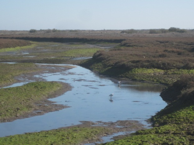 The salt marshes at Barril