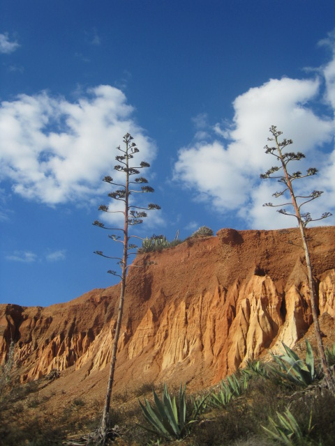 Falesia Beach has its share of plant life