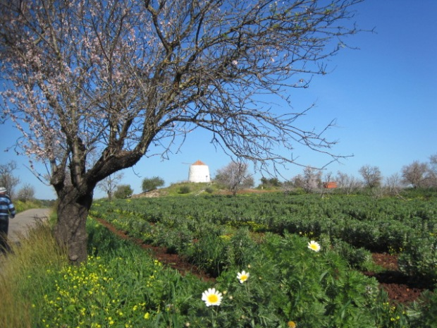 An Algarve windmill