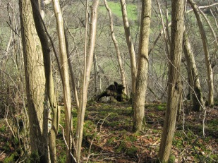 The bareness reveals strange shapes in the woods