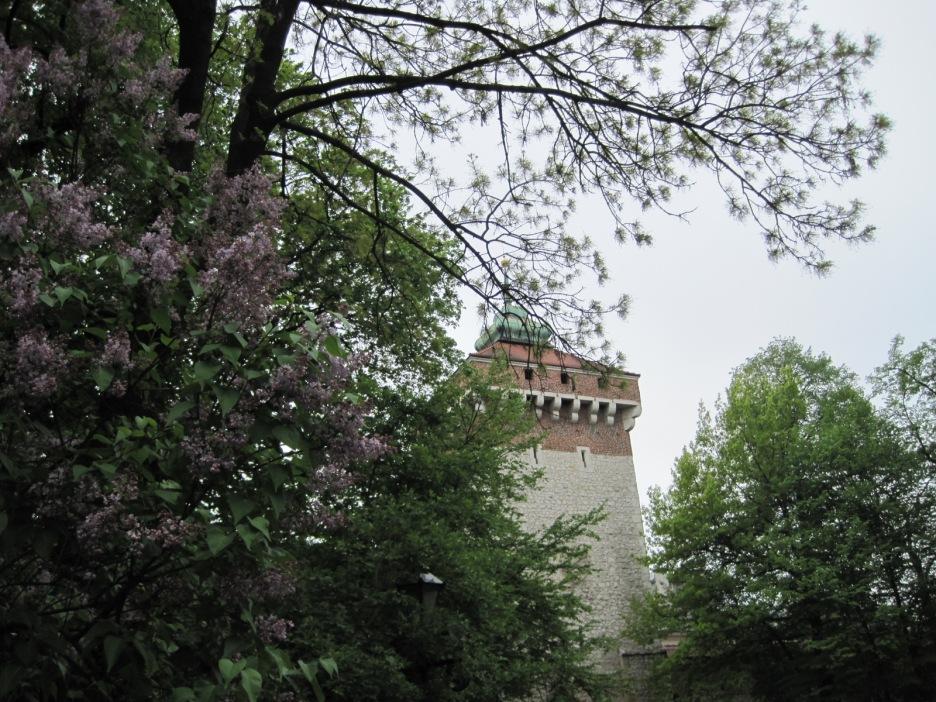 Brama Florianska, through the lilac