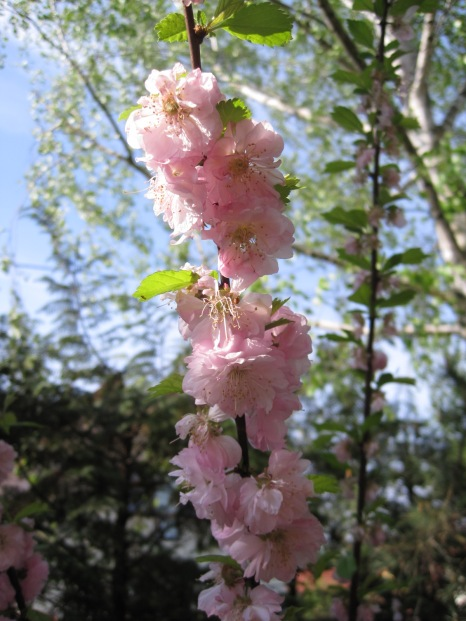 With heaps of blossom