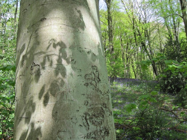 And some leaf patterns on a tree for Meg