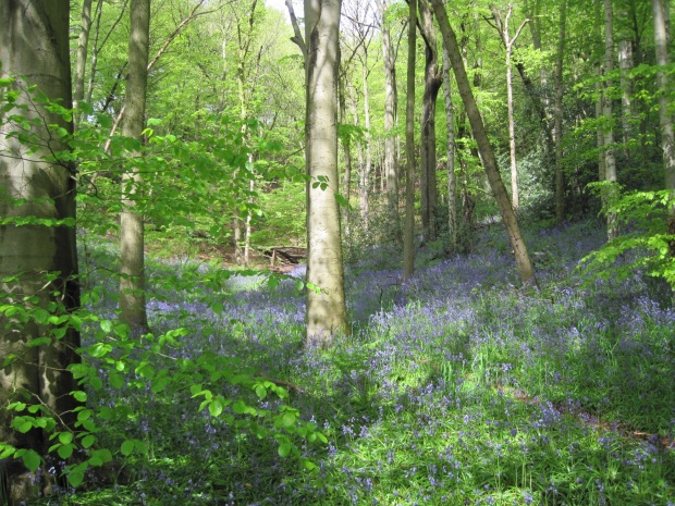 And everywhere, that sumptuous carpet of blue