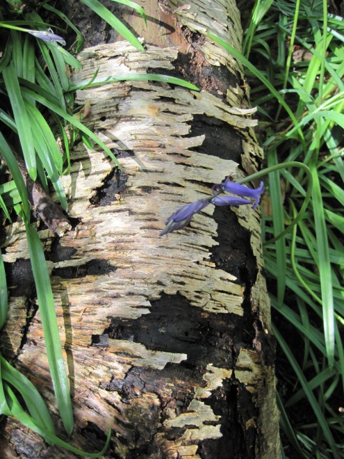 I loved the delicate beauty against the bark