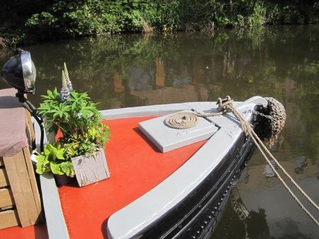 Pot plants look so nice, on board